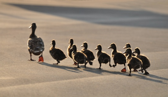 Blog.CLA.ducksFM