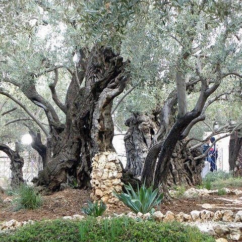 Difficult time for a steward leader: learn from Jesus in Gethsemane